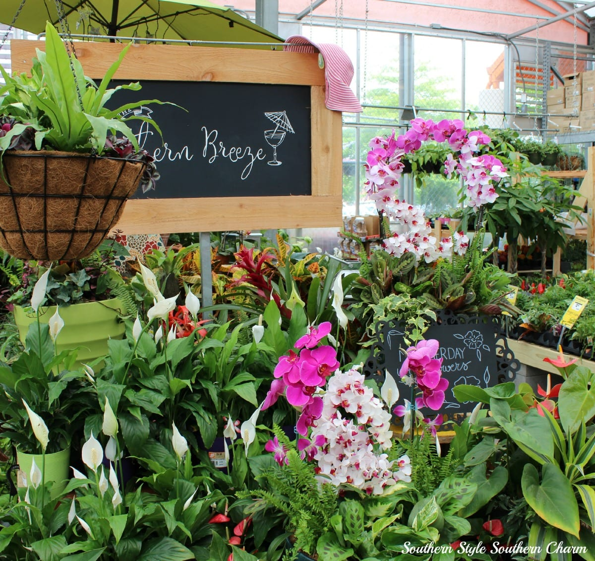 Container Gardening with the Southern Living Plant Collection